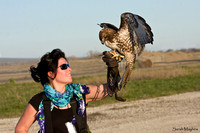 Caroline Smith and Boadicea-Red-tailed Hawk